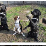 27.02 Joacă-te cu câinii terapeutici la Ziua Interacţiunii Om-Animal