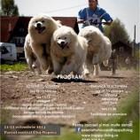 11.10-12.10 Cupa Clujului pentru atelaje canine