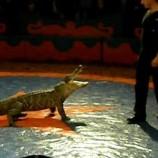 VIDEO Un crocodil pe scena Operei Române