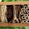 16.08 Atelier DIY pentru copii: Hotelul insectelor