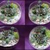 28.08 Eveniment pentru copii:  Terariu in vas de sticla tip bol