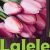 19.04 Atelier de desen in pastel pentru adulti: Lalele
