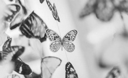 22.05 Atelier senzorial pentru toddleri: Despre fluturi