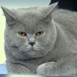 22-23.02 Expozitie internationala de pisici: International Cat Show