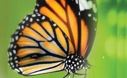 30.03 Atelier de pictură pe sticlă pentru copii: Fluturele cochet