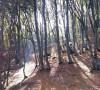 8.05 Orientare speciala in Padurea Faget