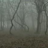 Pădurea Hoia-Baciu din Cluj, în topul celor mai înfiorătoare locuri din Europa