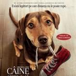 27.01 Film: A Dog's Way Home